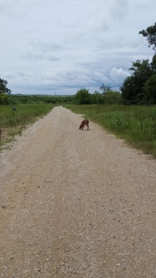 Hank on dirt road in Argyle West