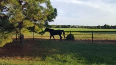 Horse on Stonecrest