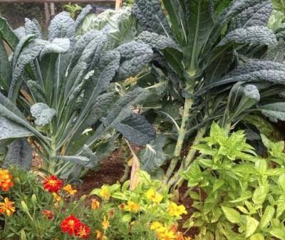 Edible Gardens!