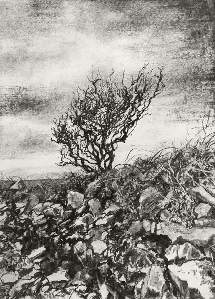 Shoreline Tree