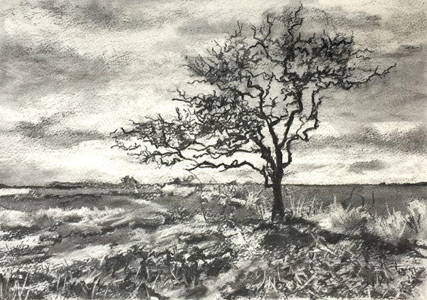 Tree at Maree