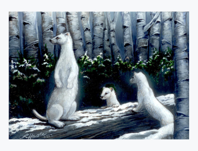 Ermine Family Wild Eyes and Fireflies Series