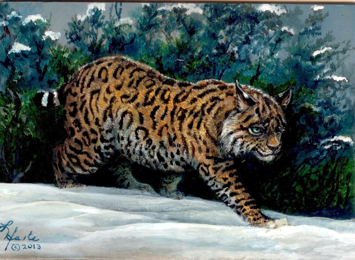 Bobcat Wild Eyes and Fireflies Series