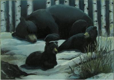 Bear Family Wild Eyes and Fireflies Series