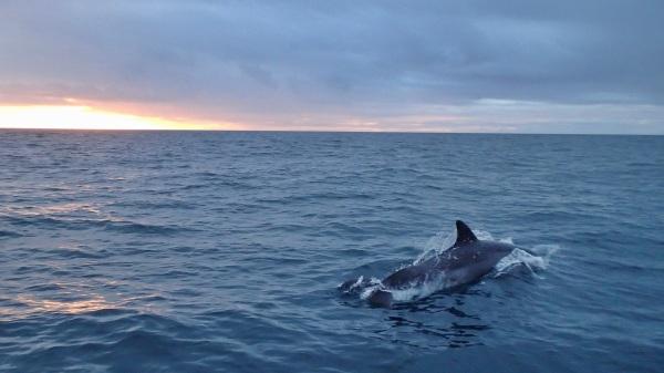 Dolphin Hilton Head sailing charter