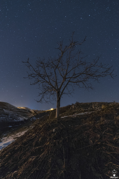 Jihad Asmar Photography akoura tree winter