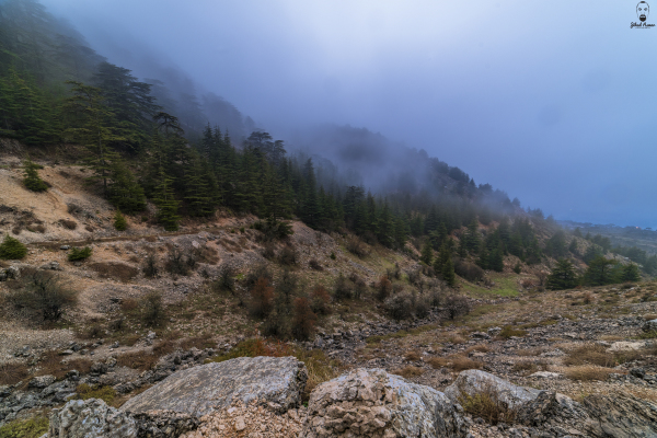 Jihad Asmar Photography fog shouf reserve