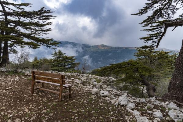 Jihad Asmar Photography tannourine reserve