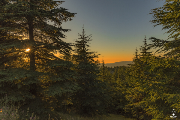 Lebanese landscape photographer - The warm sunset from shouf reserve