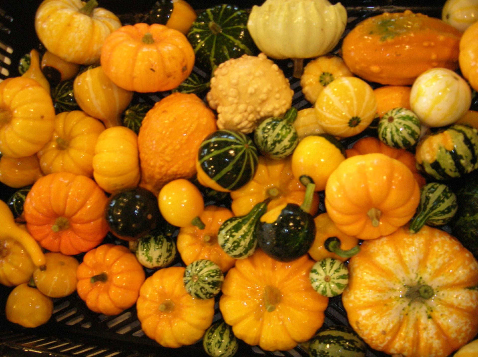 Gourds and Small Pumpkins