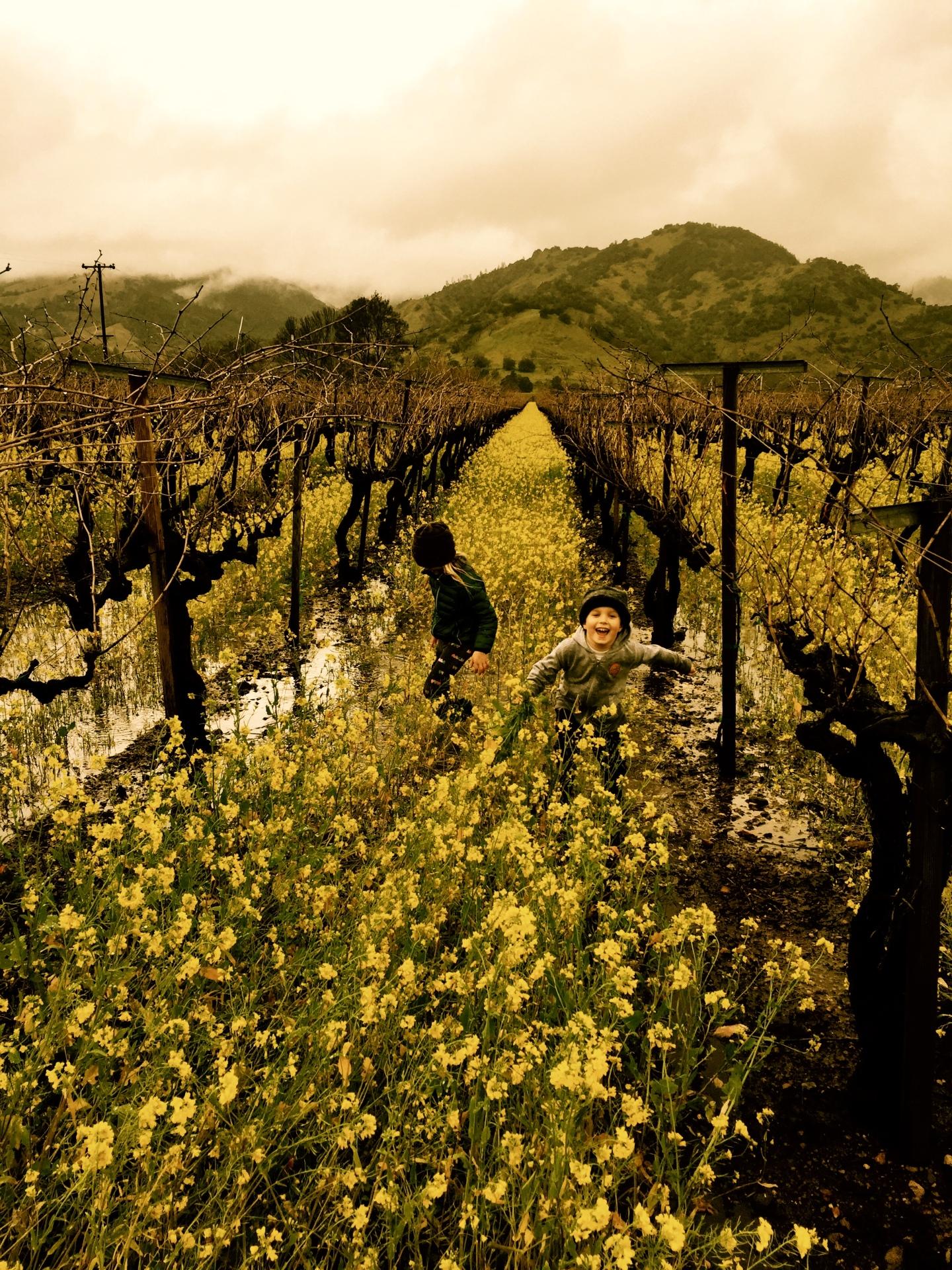 Kirk Venge's kids in the vineyard