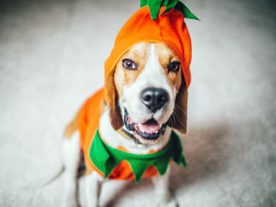 Safe Halloween Fun for You and Your Dog
