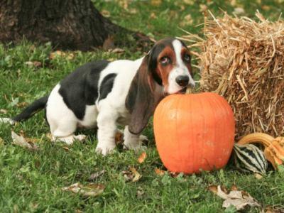 Can Pumpkin Help with Dog Diarrhea?