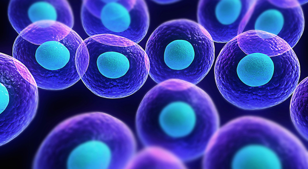 Stem Cells and a few common basic questions answered.