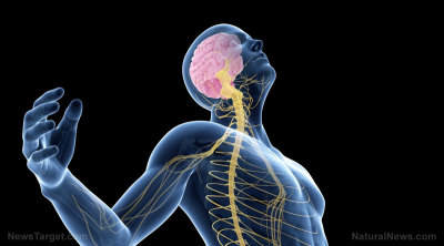 Nerves and your Spine