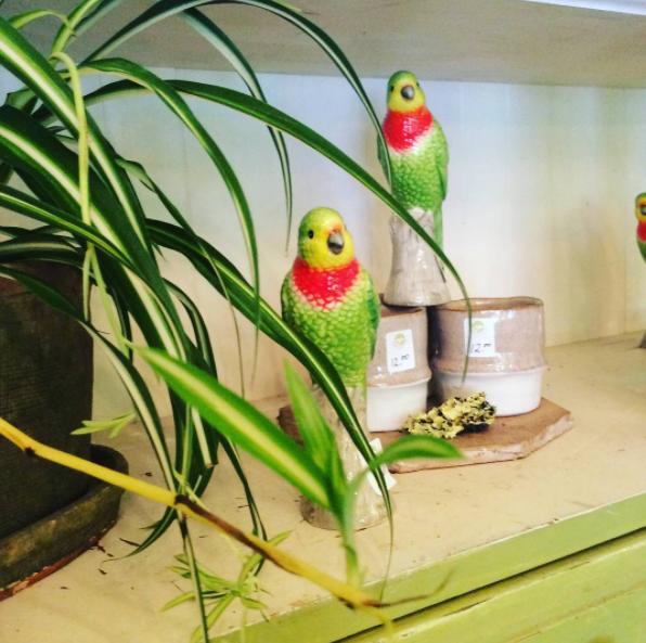 Bird Accents