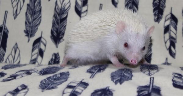 Splotch (Female)