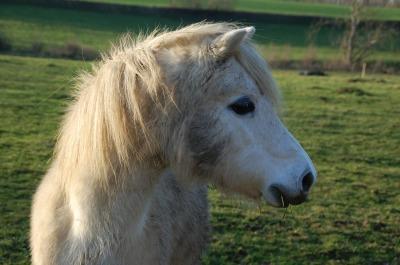 Cream colored ponies