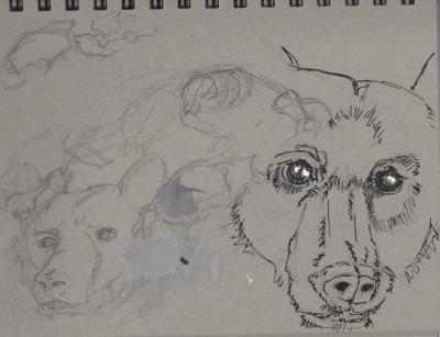 Bears: Sketching at the SF Zoo 2