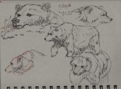 Bears: Sketching at the SF Zoo 3