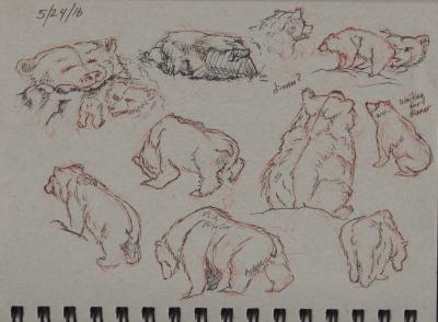 Bears: Sketching at the SF Zoo 4