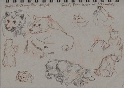 Bears: Sketching at the SF Zoo 5