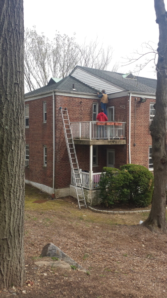 Squirrel Trapping and Repair in Bucks County, PA.