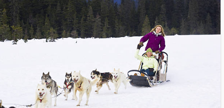 Dog Mushing Trips - Custom Trips Available