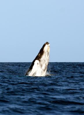 """<img src=""""verzeichnis/abbildung.jpg"""" alt=""""Whale watching"""">"""