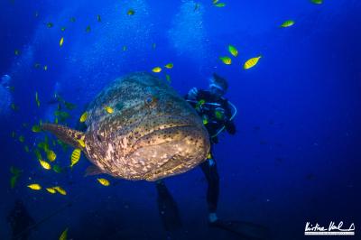 "<img src=""verzeichnis/abbildung.jpg"" alt=""Diving in Coiba"">"