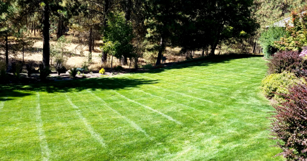 Great mow lines on this back yard apple orchard, one of my favorite clients.