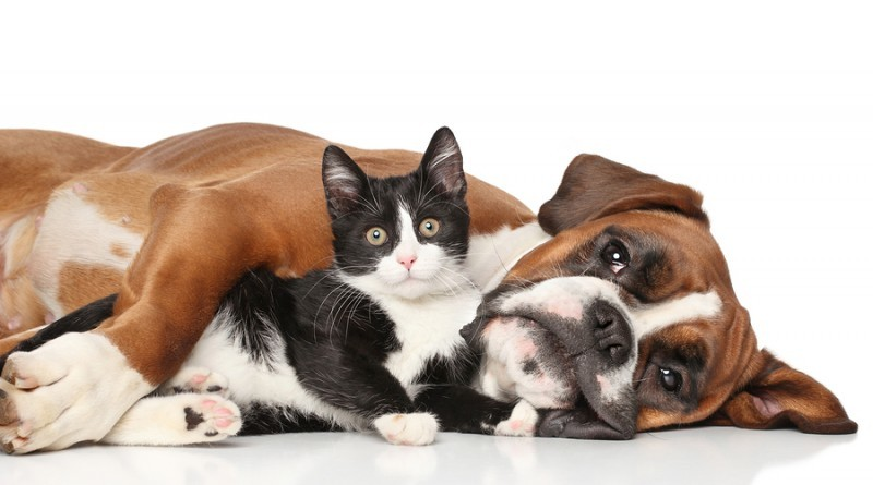 Introducing a Newly Adopted Dog to your Resident Cat