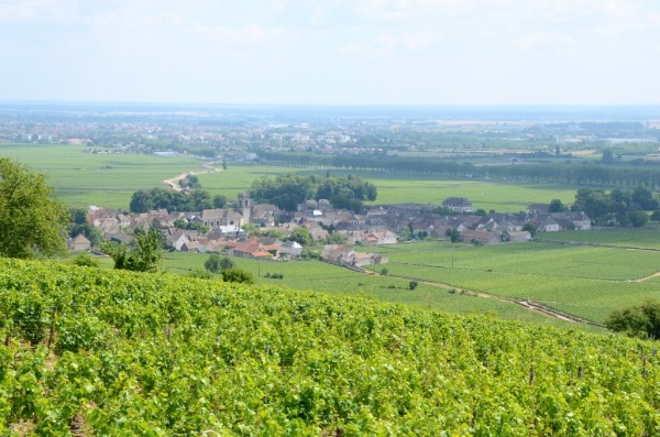 探索法國酒區,盡享名酒美食