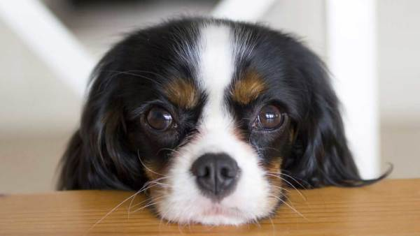 Hopeful Puppy Eyes