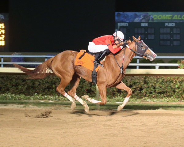 ITOBA Stallion Season Stakes - Fireball Baby Ignites Speed in ITOBA Stallion Season Fillies Stakes at Indiana Grand