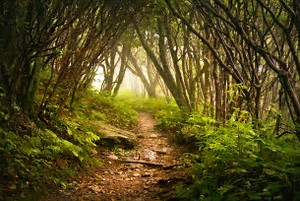 Escape into the woods
