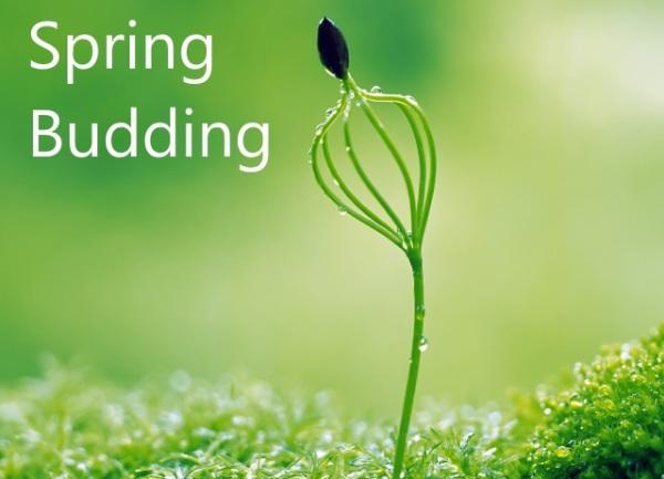 Spring Innovation