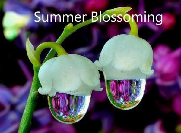 Summer Abundance