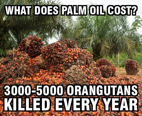 Cost of Palm Oil