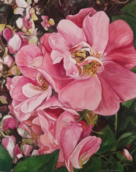 Bee And Alberta Wild Roses
