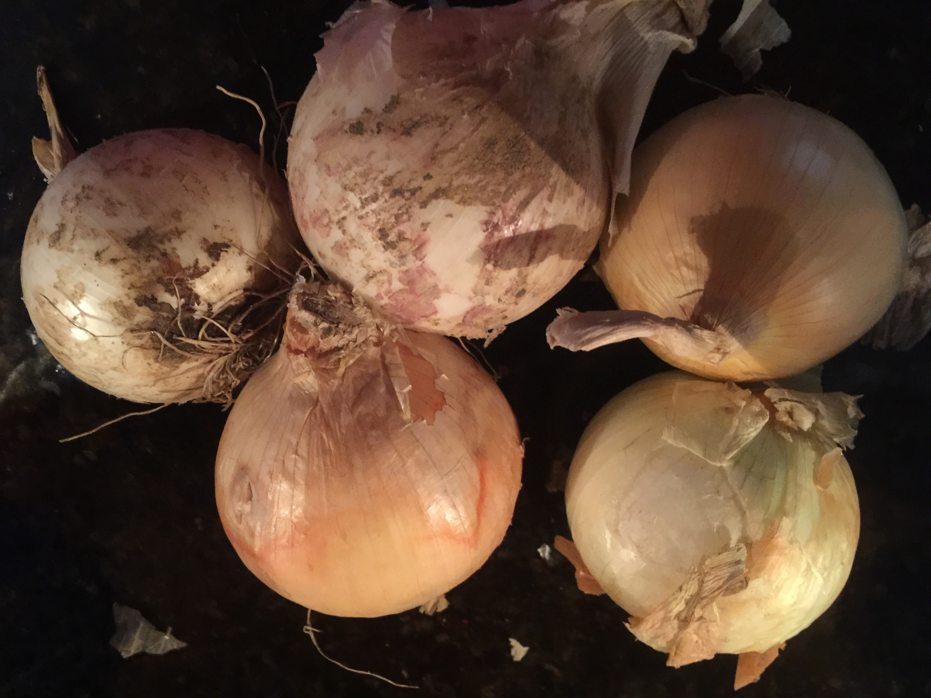 WHAT'S REALLY IN AN ONION? Find out how healthy onions really are