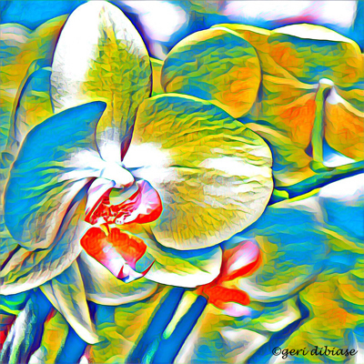 Oceanic Orchids