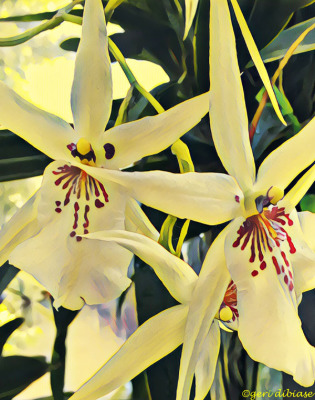 More Orchids