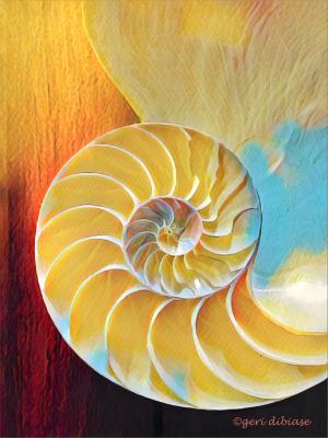 Inside a Nautilus