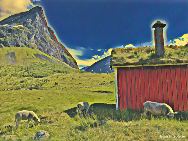 Loved the Sheep in Nordahl, Norway