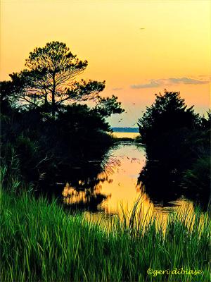 Marsh Silhouette
