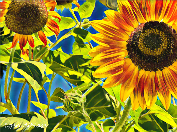 sunflower fair warnin'