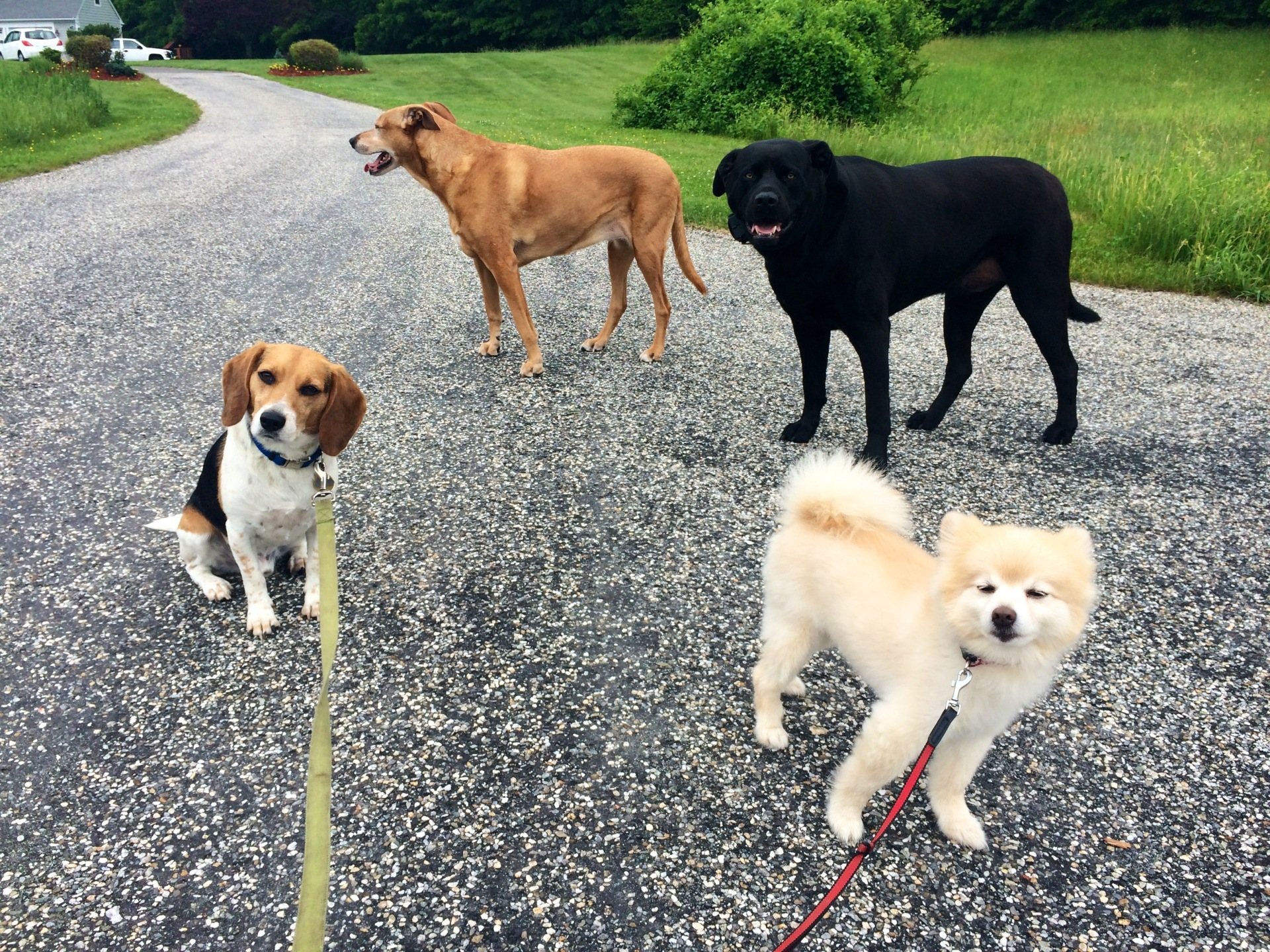 SAGE, DAISY, AMOS AND SNAP