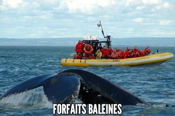 Forfaits aux baleines