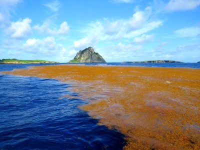 Seaweed carpet is seen in Noronha